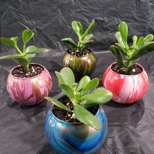 Real Plants In Handpainted Planters for Sale in Smyrna, TN