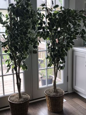 Two Artificial plant for Sale in Gaithersburg, MD