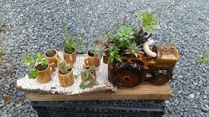 Succulent aranjament in ceramic tractor planter with small cups for Sale in Citrus Heights, CA