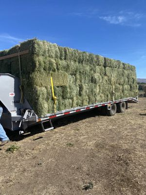 Beautiful Orchard, Alfalfa, Timothy for Sale in Graham, WA