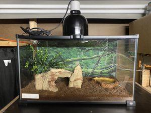 10g Reptile Tank with complete set up for Sale in Baldwin Park, CA