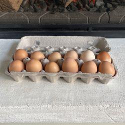 Eggs for Sale in Brush Prairie,  WA