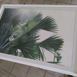 Florida Palm Tree Photo Framed for Sale in West Palm Beach, FL