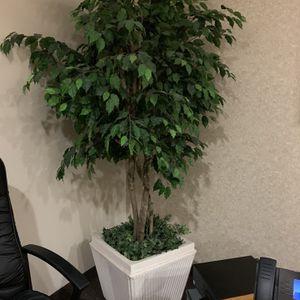 Plant With Pot for Sale in Phoenix, AZ