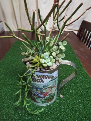 Succulents en linda base pequeña for Sale in South Gate, CA