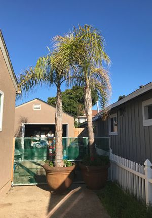 Palm trees for Sale in Chula Vista, CA