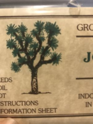 Giant Joshua tree. Seeds for Sale in Ontario, CA
