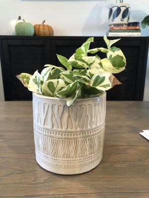 Planter pot plant not included for Sale in Chula Vista, CA