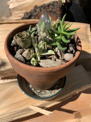 Succulents With Charm ✨ | Suculentas Con Encanto ✨ for Sale in Montclair, CA