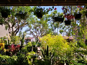 Potted Plants for Sale in Garden Grove, CA