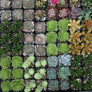SUCCULENTS - NEW STOCKS ADDED TODAY- 5/29 for Sale in Tracy, CA