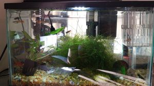 Fish tank with all staff and fish for Sale in San Francisco, CA