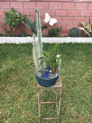 Rustic Clay vase with Madagascar palm & Variety Cactus for Sale in Fontana, CA