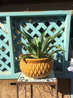 Live Outdoor Agave Plant in Yellow Planter for Sale in Laveen Village, AZ