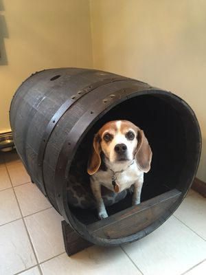 Whiskey Barrel Dog House for Sale in East Bridgewater, MA