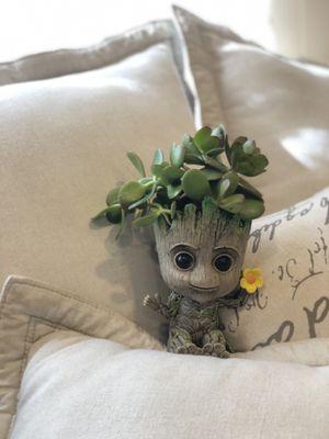 Baby groot succulent Arrangement for Sale in Westminster, CA