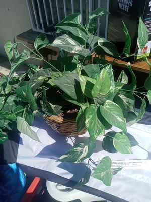 Fake plants for Sale in Victorville, CA
