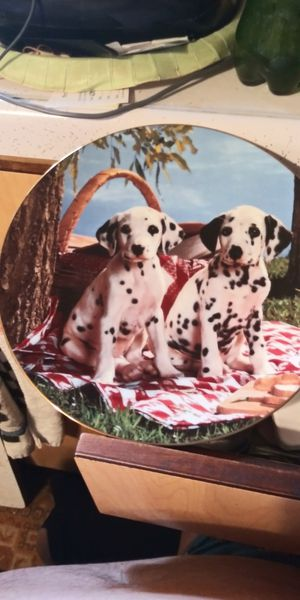 Dalmatian puppies plate for Sale in Brainerd, MN