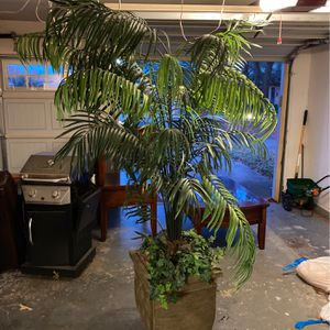 Large Decorative Plant for Sale in Bedford, TX