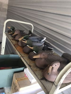 Rubber ducks and mallards for Sale in Las Vegas, NV