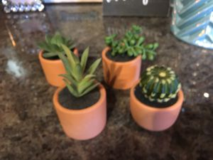 Small plants for Sale in Plano, TX