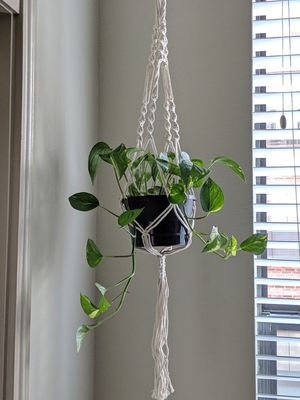 Macrame plant hanger with plant. for Sale in Houston, TX