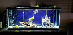 Aquarium and stuffs for Sale in MONTGOMRY VLG, MD