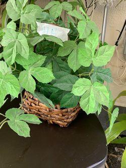 Planta Artificial for Sale in Los Angeles,  CA