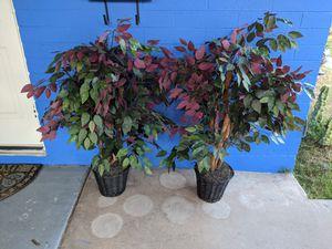 Artificial trees / plants / decor for Sale in Phoenix, AZ