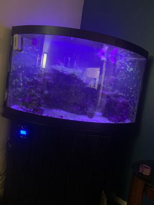 🚨 55 gallon bow front salt water tank w/ everything you need to start up your aquarium 🚨 for Sale in Brentwood, CA