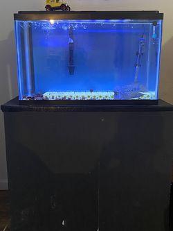 Fish Tank Aquarium Flowerhorn  for Sale in Everett, WA