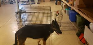 Large Breed crate for Sale in Moorestown, NJ