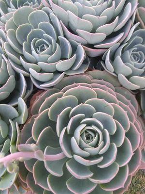 Plant for Sale in Stockton, CA