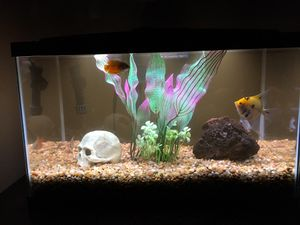 10 gallon fish tank full set up for Sale in Riverside, CA
