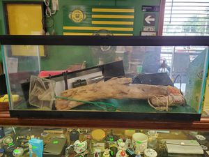 20 gallon fish tank with light and other products for Sale in North Ridgeville, OH