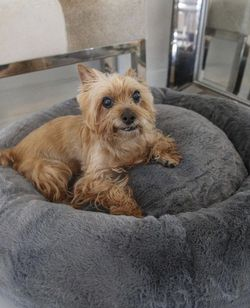 Memory Foam Bed For Medium/ Big Dogs for Sale in Miami,  FL
