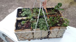 Basket plants for Sale in Vancouver, WA