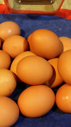Farm fresh eggs for Sale in Leesburg, VA