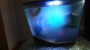 Brand new Fish tank with ornaments and 3 fish! for Sale in Dearborn, MI