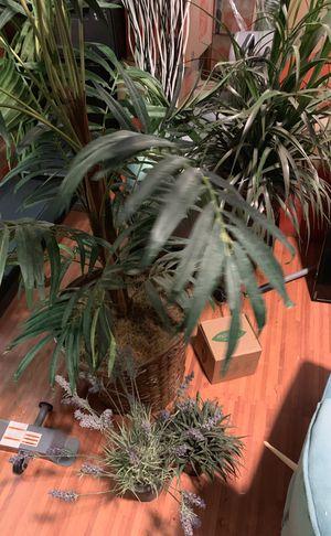 Fake plants, indoor, 4 plants for Sale in Redmond, WA