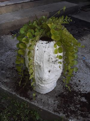 Head shaped pot with plant included for Sale in Seneca, SC