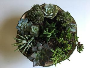 Succulent arrangement for Sale in Evanston, IL