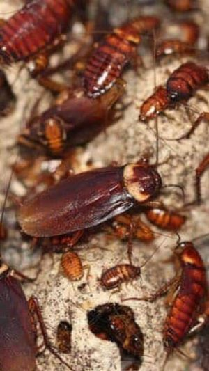 DONT LET YOUR WHOLE HOUSE GET INFESTED CONTACT US NOW for Sale in Germantown, MD
