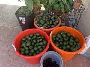 Avocados 10 pieces/ 10 piezas de aguacate orgánico for Sale in Los Angeles, CA