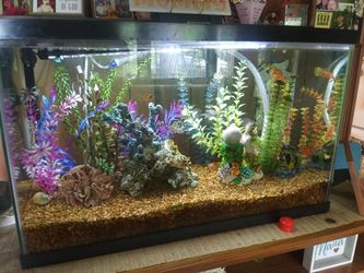 30 gallon tank all supplies and fish (if u want) for Sale in Indianapolis,  IN