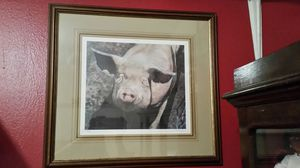 Beautiful hog picture by Patterson a. W. for Sale in Verona, VA