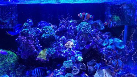 Reef Tank for Sale in Long Beach,  CA