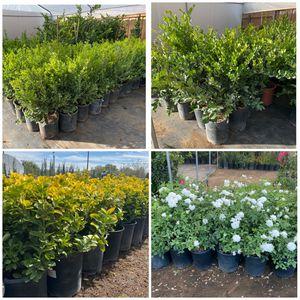 Plants Sale $10 Each 5 Gal for Sale in Perris, CA