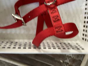 Dog leash and collar for Sale in Cleburne, TX