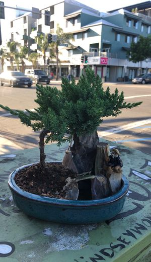 Japanese juniper bonsai with mountains and fish man look like a small fountain for Sale in San Diego, CA